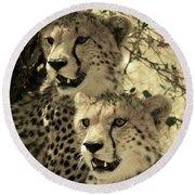 Two Cheetahs Round Beach Towel