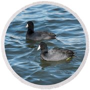 Two Coots Round Beach Towel
