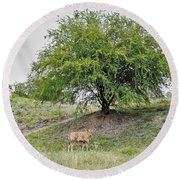 Two Cows And A Tree Round Beach Towel