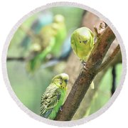 Two Cute Little Parakeets In A Tree Round Beach Towel