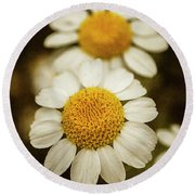 Two Daisies Round Beach Towel