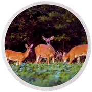 Two Doe And One Buck Round Beach Towel