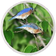 Two Eastern Bluebirds Round Beach Towel