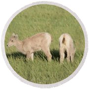 Two Ewes In The Badlands Round Beach Towel