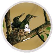 Two Hummingbird Babies In A Nest 5 Round Beach Towel