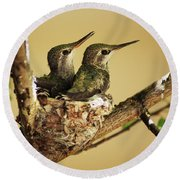 Two Hummingbird Babies In A Nest Round Beach Towel