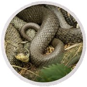 Two Intertwined Grass Snakes Lying In The Sun Round Beach Towel