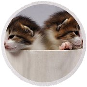 Two Kittens In A Wooden Bucket Round Beach Towel