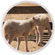Two Little Lambs. Round Beach Towel
