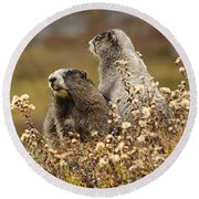 Two Marmots Round Beach Towel