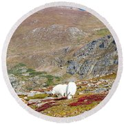 Two Mountain Goats On Mount Bierstadt In The Arapahoe National Fores Round Beach Towel