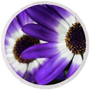 Two Purple N White Daisies Round Beach Towel