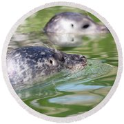 Two Seal Swimming Nature Scene Round Beach Towel
