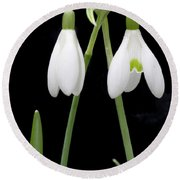 Two Snow Drops Round Beach Towel