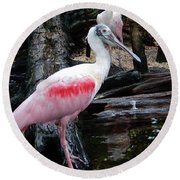 Two Spoonbills Round Beach Towel
