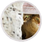 Two Stray Cats Round Beach Towel