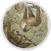 Two-toed Sloth Round Beach Towel