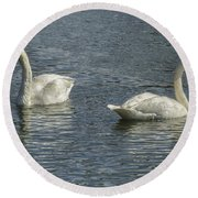 Two Trumpeter Swans At Oxbow Bend Round Beach Towel