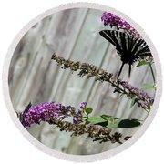 Two Zebra Swallowtail Butterflies Round Beach Towel