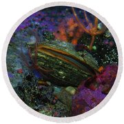 Undersea Clam Round Beach Towel