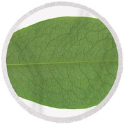 Underside Of A Coca Leaf, Erythroxylon Round Beach Towel