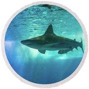 Underwater White Shark Round Beach Towel