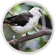 Unknown White Bird On Tree Branch Round Beach Towel