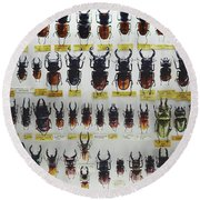 Unusual Pattern Made Out Of Many Stag Beetles Of Different Sizes Round Beach Towel