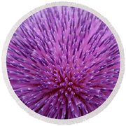 Up Close On Musk Thistle Bloom Round Beach Towel