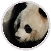 Up Close With A Gorgeous Giant Panda Bear Round Beach Towel