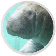 Up Close With A Manatee Round Beach Towel