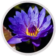 Upbeat Violet Elegance - The Beauty Of Waterlilies  Round Beach Towel