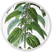 Urtica Dioica, Often Called Common Nettle Or Stinging Nettle Round Beach Towel