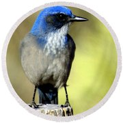 Utah Bird Round Beach Towel