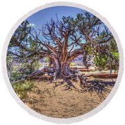 Utah Juniper On The Climb To Delicate Arch Arches National Park Round Beach Towel
