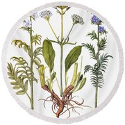 Valerian Flowers, 1613 Round Beach Towel