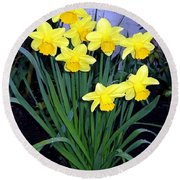Vancouver Daffodils Round Beach Towel