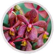 Vanda Orchids Round Beach Towel