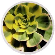 Variegated Succulent Round Beach Towel