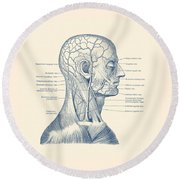 Vascular And Muscular System - Vintage Anatomy Print Round Beach Towel