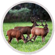 Velvet Antlers In The Sunset Round Beach Towel