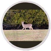 Vermont White-tailed Deer  Round Beach Towel