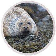 Very Chubby Harbor Seal Round Beach Towel