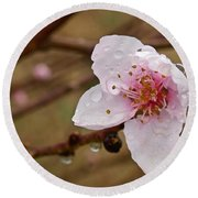 Very Early Peach Blooms Round Beach Towel