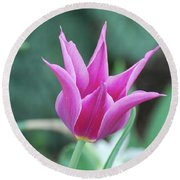 Very Pretty Blooming Pink Spikey Tulip Flower Blossom Round Beach Towel