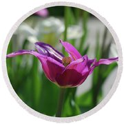 Very Pretty Blooming Purple Tulip With Spikey Petals Round Beach Towel