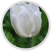 Very Pretty Blooming White Tulip In A Garden Round Beach Towel