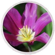 Very Pretty Dark Pink Blooming Tulip With Yellow In The Center Round Beach Towel