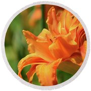 Very Pretty Double Orange Daylily Flowering In A Garden Round Beach Towel