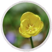 Very Pretty Flowering Yellow Tulip Blooming In A Garden Round Beach Towel
